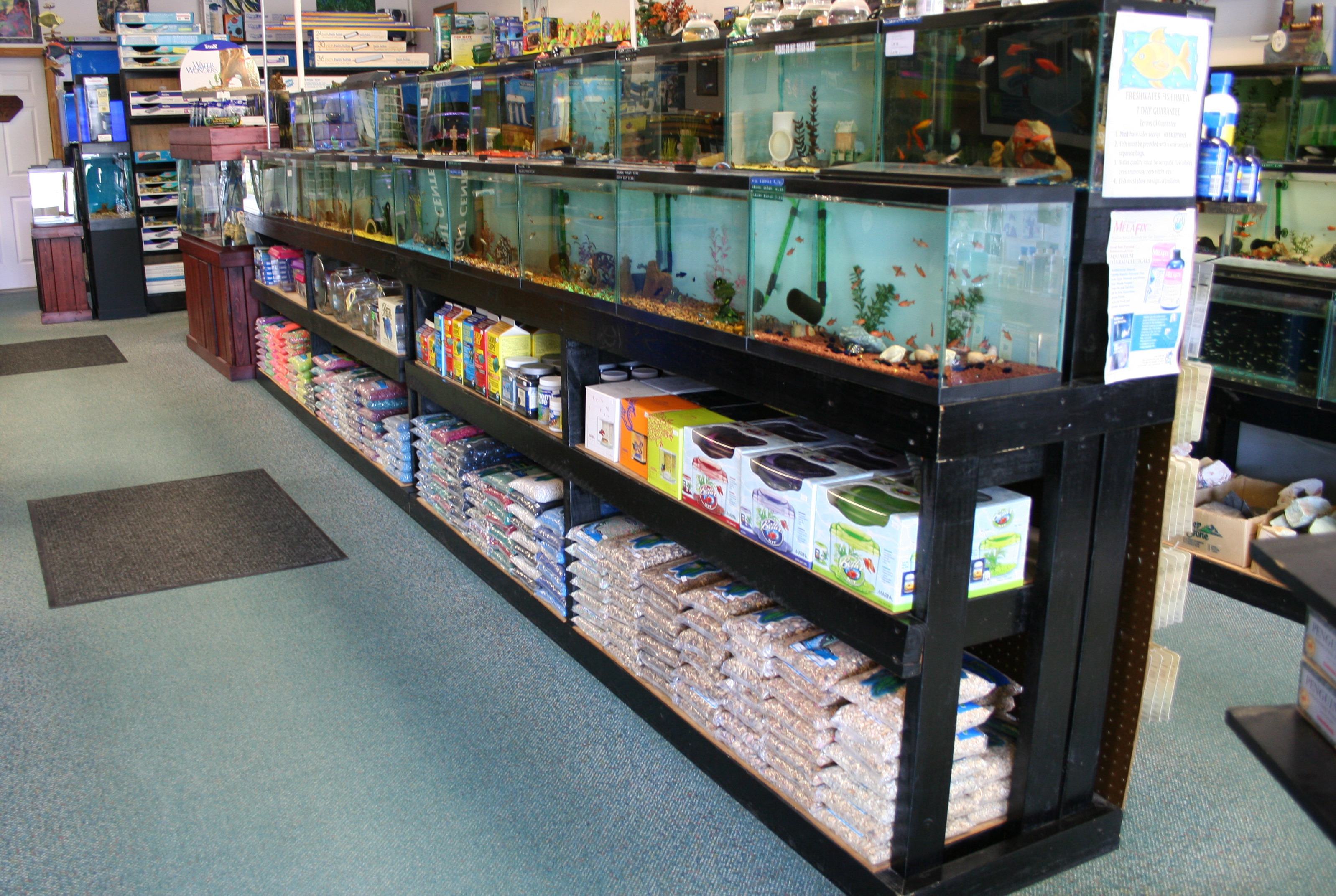 Freshwater aquarium fish jacksonville fl - Fish Cave We Gladly Accept Open 7 Days A Week Foryour Convenience Monday Tuesday 10 30 A M 7 00 P M Wednesday Saturday10 30 8 00 Sunday 1 00